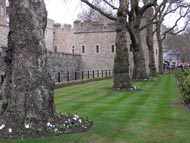 Trees Outside Tower Of London
